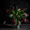 Wilting tulips