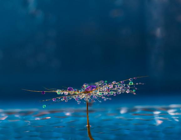 Purple water drops