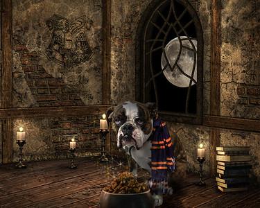 Hogwarts for Dogs