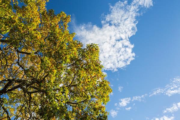 Tree and Clouds. Augustin Bernal Park. Pleasanton, CA