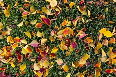 Autumn Foliage. Del Prado Park - Pleasanton, CA, USA