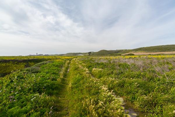 Wildflower Field. Near Bonny Doon Beach - Davenport, CA, USA