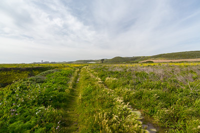 Wildflower Field. Near Bonny Doon Beach - Davenport, CA, USA