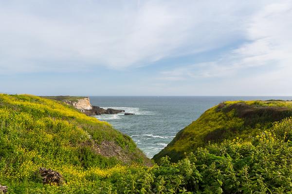 Pacific Ocean & Wildflower Field. Between Bonny Doon Beach & Shark Fin Cove - Davenport, CA, USA