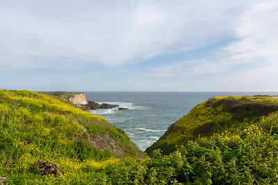 Pacific Ocean & Wildflower Field. Between Bonny Doon Beach & Shark Fin Cove - Davenport, CA, USA