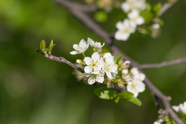 Flowers. Arroyo Del Valley Trail - Pleasanton, CA, USA