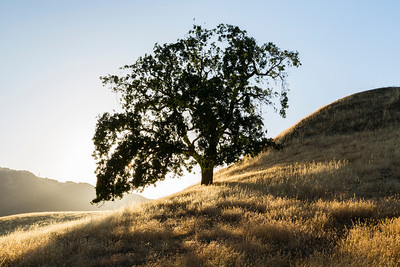Sunset. Pleasanton Ridge Regional Park - Sunol, CA, USA