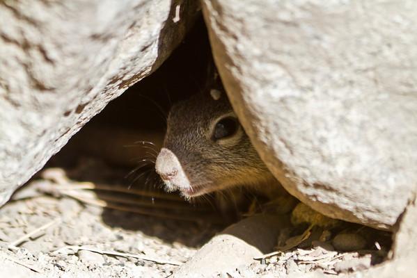 Squirrel. Yosemite Village - Yosemite National Park - California, USA