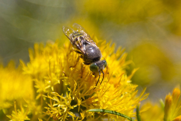 Horsefly. South Tufa. Inyo National Forest, CA, USA