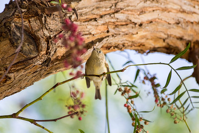 Bird. Fremont Central Park - Fremont, CA, USA
