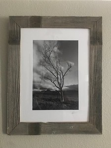 Untitled  Black and White - Cuyamaca State Park 12x18 Print