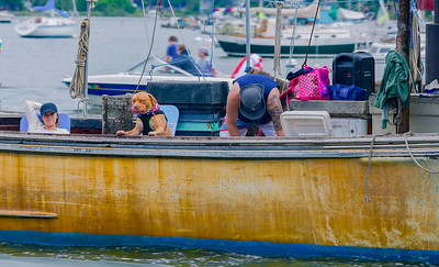 All hands and Paws On Deck!