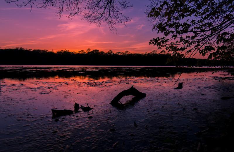 Serene Sunset or Loch Ness Monster Sighting?