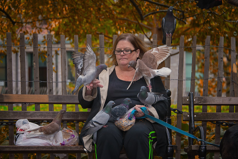 Pigeon Whisperer of Washington Square Park