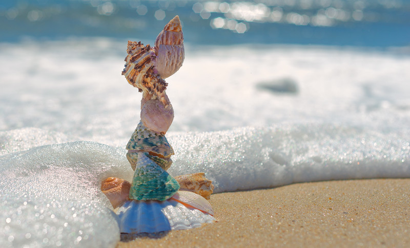 Stacking sea shell on the seashore