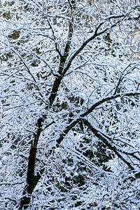 Snowy_Tree_Design_3_KKD3897