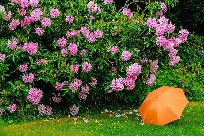 Orange Umbrella & Flowers #1