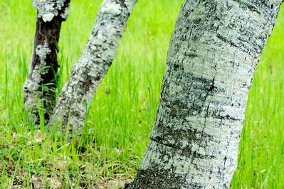 Trees_Grasses_f22_KKD5419