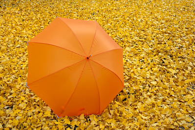 Fall Color with Orange Umbrella