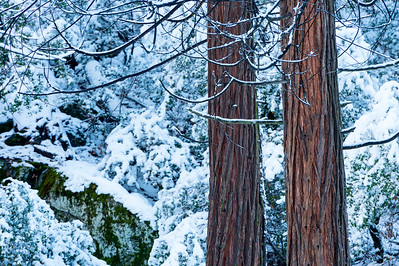 Trees_and_Snow_2_KKD3930