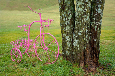Colorful Bike, Distinctive Trees