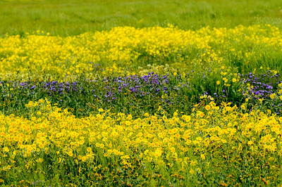 Carrizo_Wildflowers_Layers_KKD9579