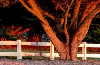Trees_Fence_Sunset_DAK3172