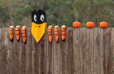 Crow_Scarecrow_DAK0953