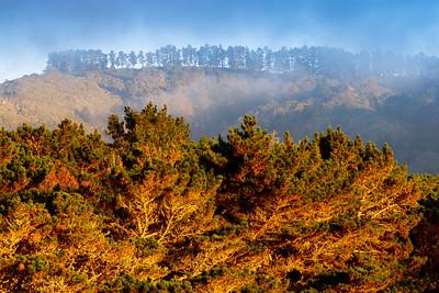 Coastal_Trees_Fog_Sunset_PtLobos_KDA0605