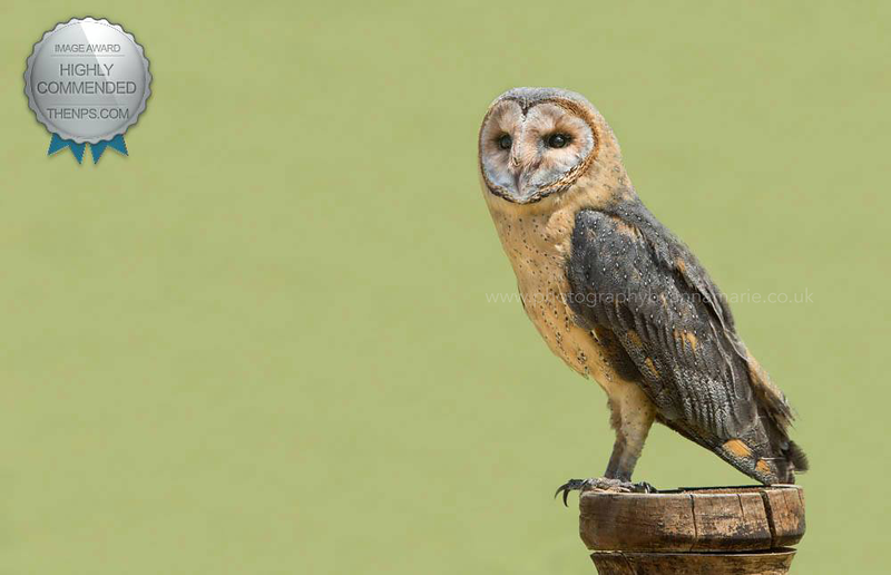 Owl - Wildlife Photographer in Bristol