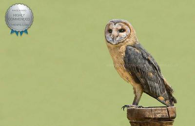 Owl - Wildlife Photographer in Bristol