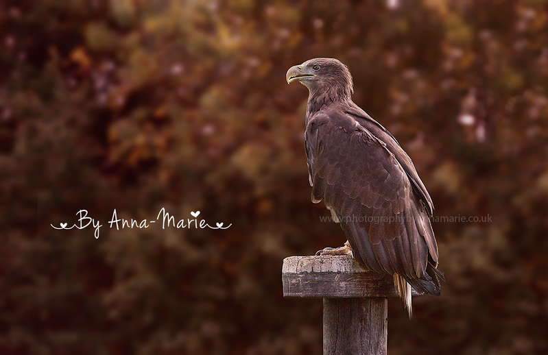 Bird Photographer - Anna-Marie Coster