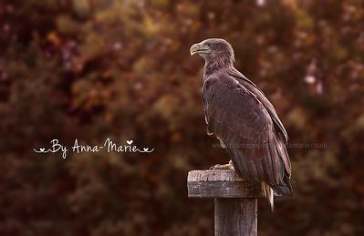 Bird Photographer - Anna-Marie Coster