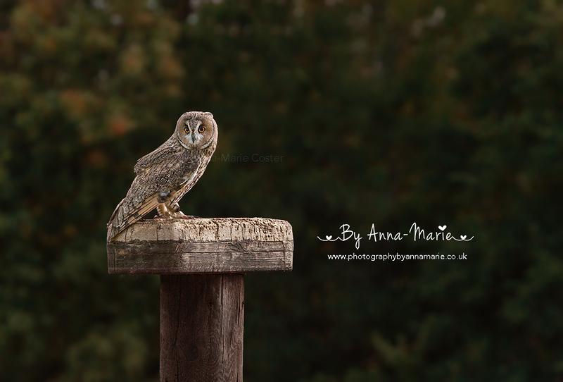 Bird Photography - Bristol