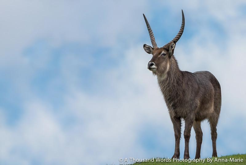 Animal Photographers Somerset