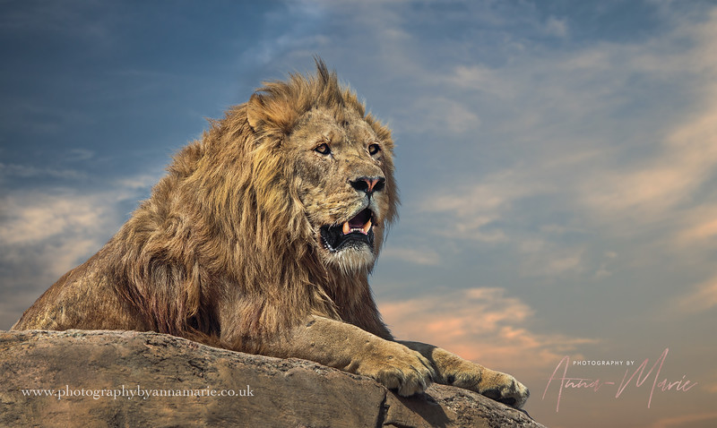 Animal Photographer UK
