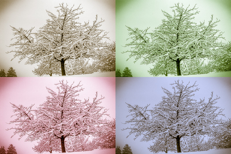 Tree in a snowstorm - sepia, green, magenta, blue.