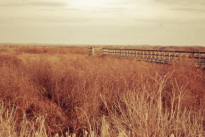 Paines Prairie