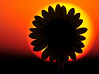 Sun on Sun