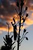 mantis sunset