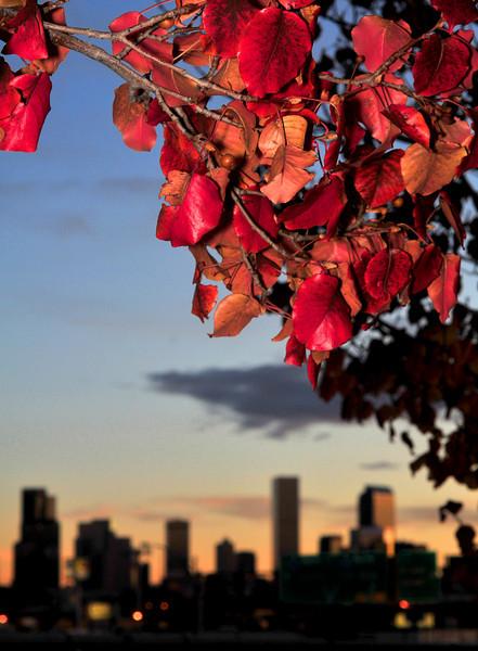 Fall Color Near Downtown Denver