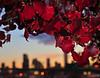 Skyline Red