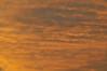 Apricot Skies