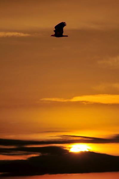 Barr Lake Sunrise