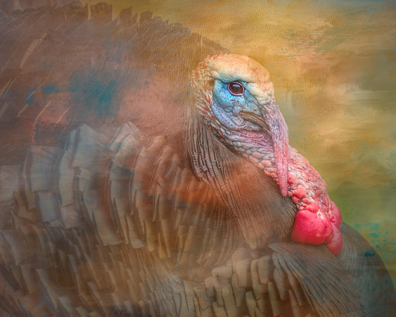 Tom Turkey in Full Regalia