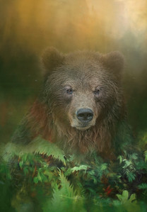 Brown Bear Fantasy