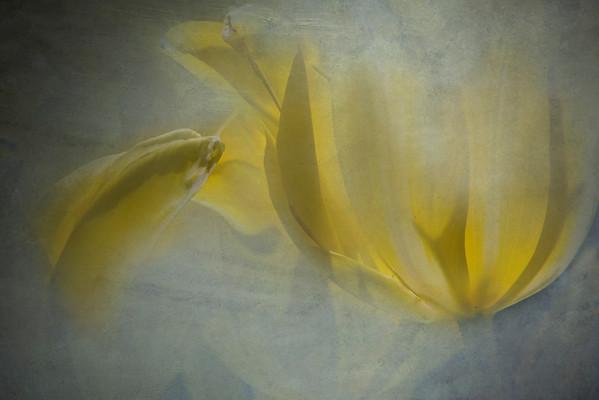 Tulip Pastels