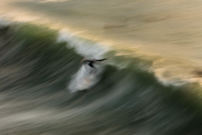 Blurred in Time Surfer