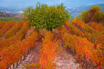 Autumn Vineyard #1