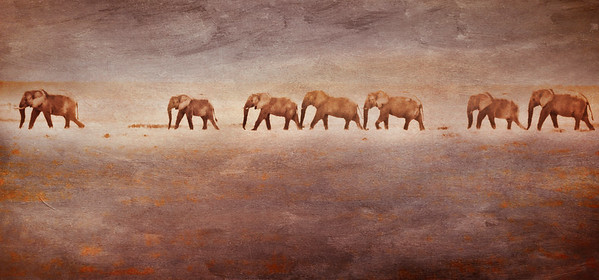Elephants in a Sandstorm